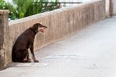 image of stray dog  - Lonely stray dog  - JPG
