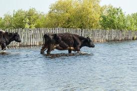 foto of water shortage  - The high water flooded kitchen gardens - JPG