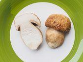 picture of boletus edulis  - Boletus edulis aka penny bun or porcino mushroom or cep  - JPG