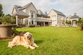 pic of dog-house  - Golden Retriever at Home lying relaxed in the beautiful big garden of the big mansion house where she lives - JPG