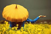 pic of mustard seeds  - A girl standing in a yellow turnip field holding a yellow vintage umbrella while the rain falls into her hand - JPG