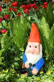 stock photo of gnome  - Garden gnome sitting among fern and tulips - JPG