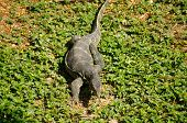 pic of monitor lizard  - water monitor live habitat where is water lake and river - JPG