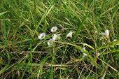 picture of tall grass  - small summer flowers surrounded by lush green tall grass - JPG
