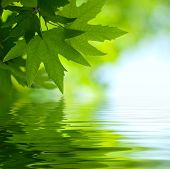 stock photo of green leaves  - green leaves reflecting in the water shallow focus - JPG