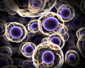 picture of prophase  - Abstract cells in mitosis or multiplication of cells - JPG