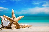 Seashells By The Sea. Beach Holiday. Beautiful Summer Background poster
