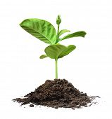 foto of nurture  - plant tree white background - JPG
