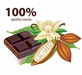 stock photo of cocoa beans  - Chocolate vanilla flower and fruit of the cocoa - JPG