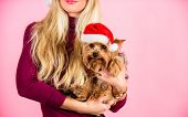 Ways To Have Merry Christmas With Pets. Girl Attractive Blonde Hold Dog Pet Pink Background. Woman A poster