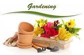 Beautiful spring flowers in wooden crate and gardening tools isolated on white