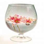 stock photo of distortion  - Still life with cracked pink daisies in water - JPG