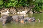 stock photo of gunung  - Elephant Bath in Gunung Leuser national park  - JPG