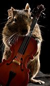 foto of cello  - degu hamster standing full - JPG