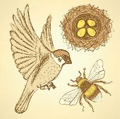 picture of bumble bee  - Sketch set with sparrow bee and nest in vintage style vector - JPG