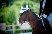 stock photo of girth  - children dressage - JPG