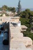image of curio  - Seagull take sun in saturday morning in Cagliari - JPG