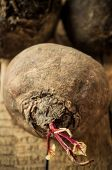 image of root-crops  - Vegetable beet - JPG