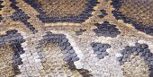 pic of python  - Python skin is used to make background - JPG