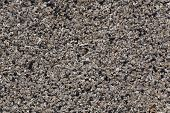 image of stone floor  - small stones flooring as a texture background - JPG