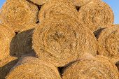 foto of hay bale  - Piled hay bales on a field against blue sky at sunset time - JPG