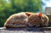 pic of homeless  - homeless cat sleeping on the street, dreams and basking in the sun ** Note: Visible grain at 100%, best at smaller sizes - JPG