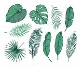 Hand Drawn Vector Illustration - Palm Leaves (monstera, Areca Palm, Fan Palm, Banana Leaves). Tropic poster