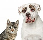 picture of puppy kitten  - Kitten and strong dog - JPG