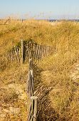 picture of sea oats  - A wood slat fence in sand dunes on a beach covered in sea oats - JPG