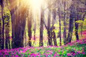 Spring Nature. Beautiful Landscape. Beauty Park with Green Grass, blooming wild flowers and Trees. T poster