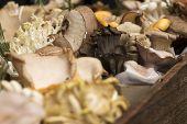 Set Of Mushrooms In Birch Bark Boxes At Borough Market poster