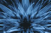 Hallucinations In Shape Of Big Surreal Plant With Long Leaves Close Up. Negative Abstract Illusion O poster
