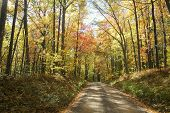 leaves changing colors along a dirt road in the Allegheny National Forest in fall