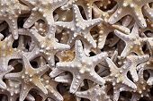 Closeup Of Starfish. Abstract, Texture And Natural poster