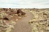 foto of paleozoic  - trail through petrified forest - JPG