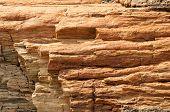 stock photo of paleozoic  - petrified wood detail - JPG