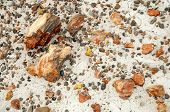 foto of paleozoic  - large and small pieces of petrified wood - JPG