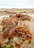 stock photo of paleozoic  - petrified logs and grassy landscape - JPG
