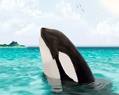 Illustration Of A Killer Whale Whale In Sea Water.killer Whale In The Water And The Island In The Il poster