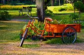 pic of tricycle  - Flowers on The back of a Tricycle - JPG