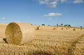 picture of hayfield  - Rolled bales of hay in hayfield on a sunny day - JPG