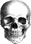image of cranium  - vector simple illustration with dotted skull - JPG