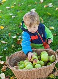 image of crip  - Adorable little boy eating apple in autumn garden - JPG