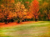 stock photo of fall trees  - colorful autumn trees - JPG
