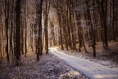 stock photo of snowy-road  - Snowy road in a forest with snow in winter at sunrise - JPG