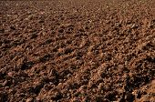 pic of plowed field  - Plowed field prepared for new planting - JPG