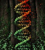 picture of double helix  - DNA damage symbol as a dark tree forest growing a green vine in the shape of a genetic double helix icon that is aging to autumn colors losing leaves as a metaphor for age related illness and cancer disease - JPG