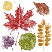 stock photo of filbert  - Hand drawn autumn leaves set - JPG