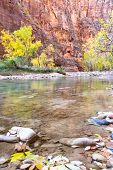 stock photo of serenity  - beautiful serene landscape in Autumn with the virgin river red sandstone and glowing yellow trees in Zion National Park Utah - JPG