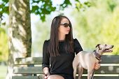 image of greyhounds  - Young attractive girl with greyhounds sitting on bench in the park - JPG